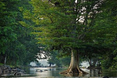 Kerala Backwater Ecosystem